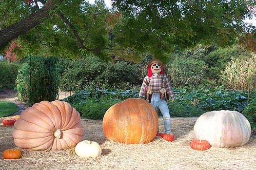 One Ton of Pumpkin